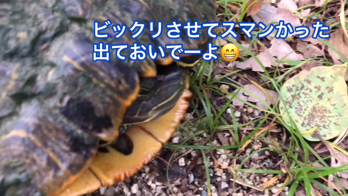 f:id:big-yamatohou:20190728170052p:plain