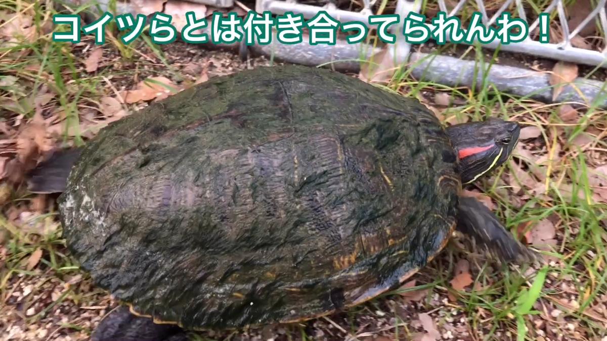 f:id:big-yamatohou:20190728170140p:plain