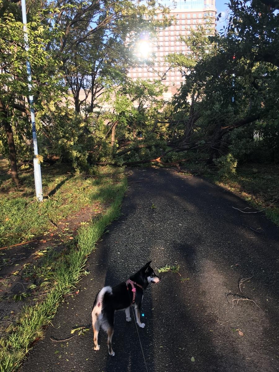 f:id:big-yamatohou:20190815233003j:plain
