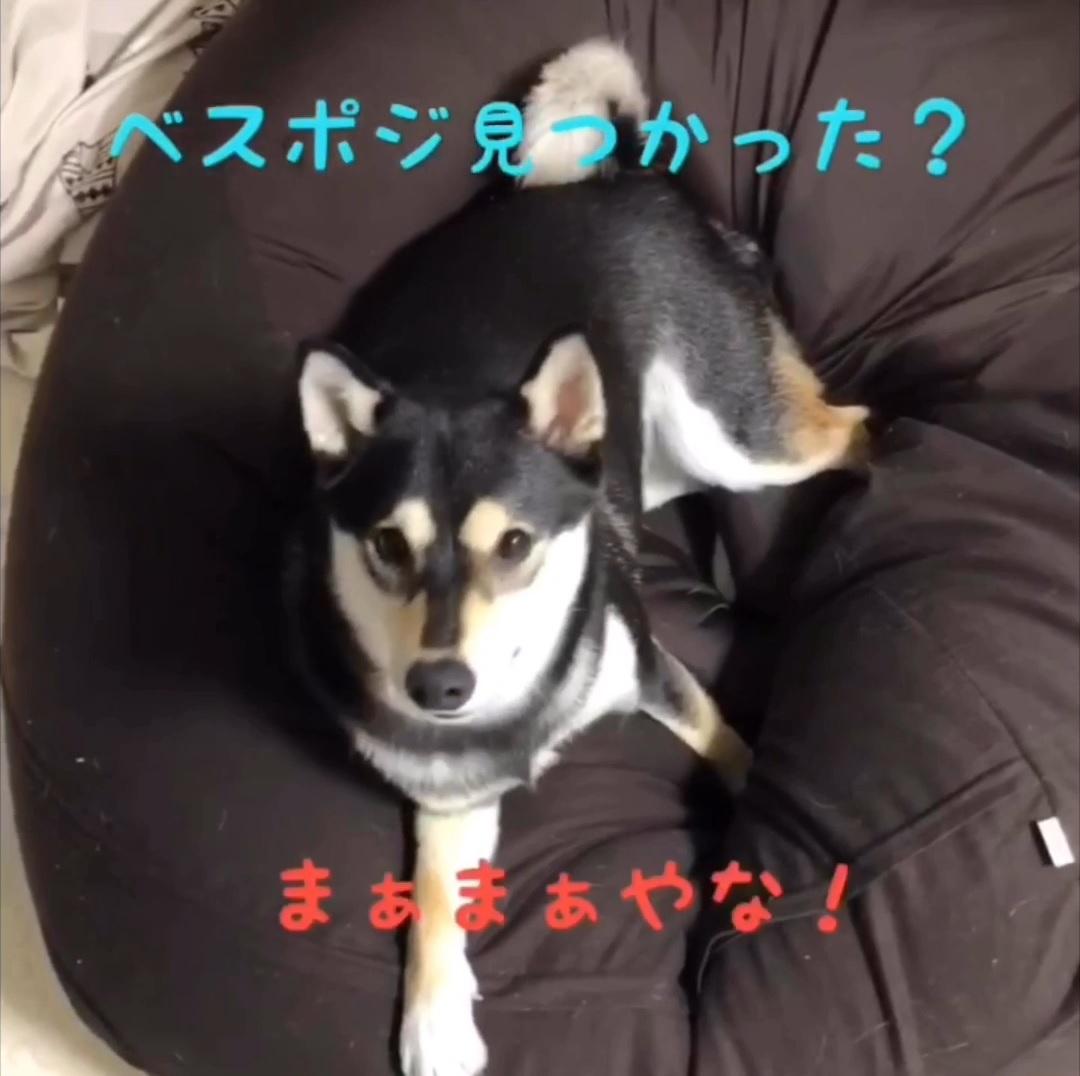 f:id:big-yamatohou:20190903003706j:plain