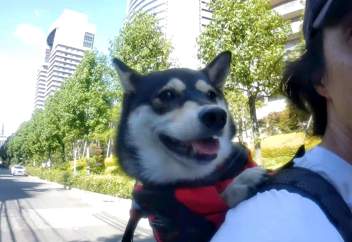 f:id:big-yamatohou:20190915204504j:plain
