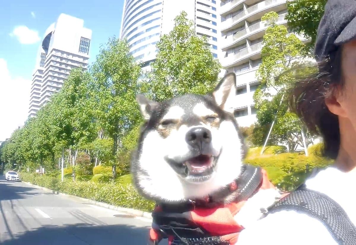 f:id:big-yamatohou:20190915204525j:plain