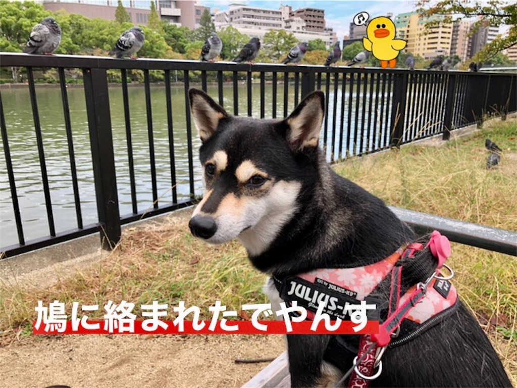 f:id:big-yamatohou:20191020223314j:image