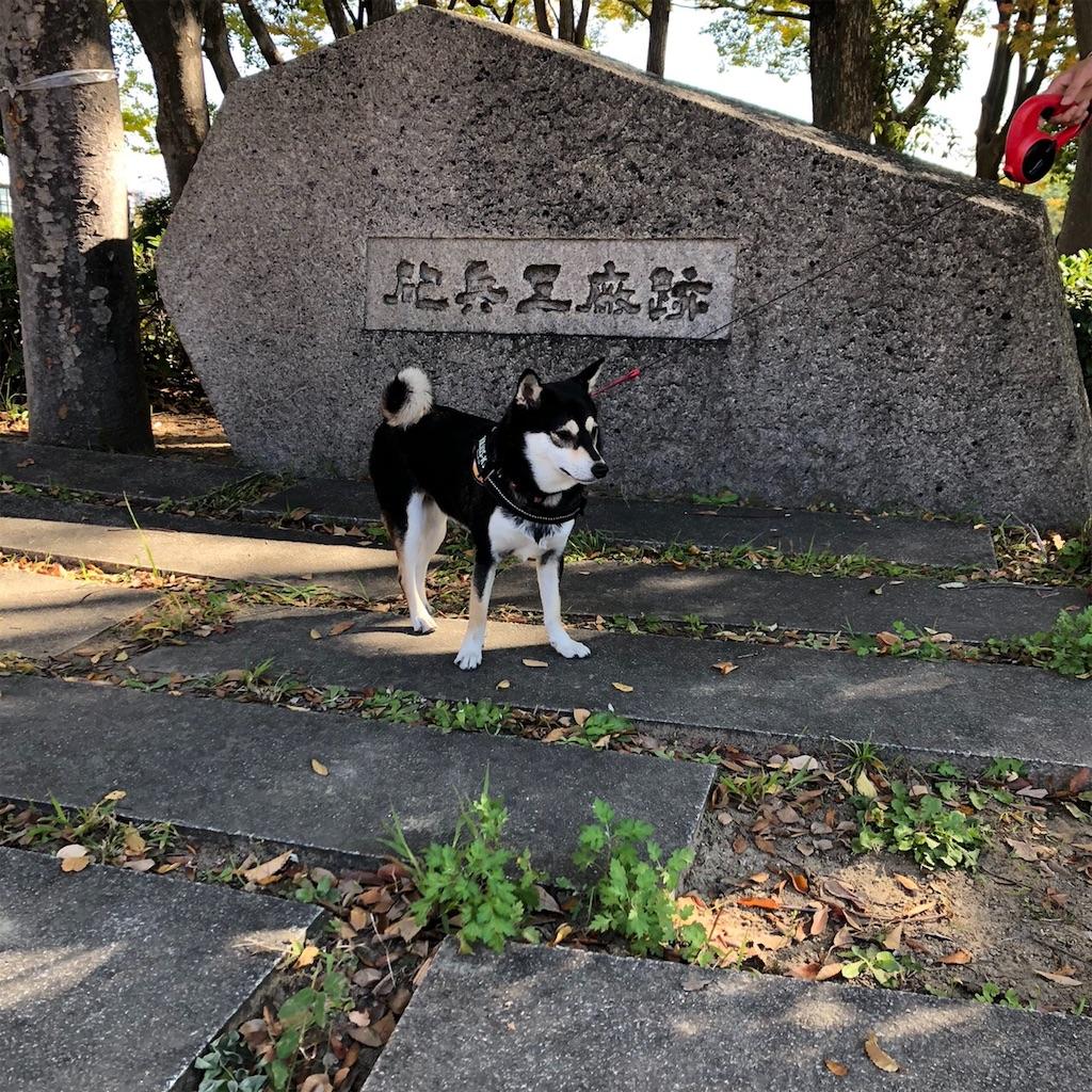 f:id:big-yamatohou:20191110231633j:image