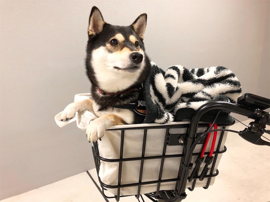 柴犬 電動自転車