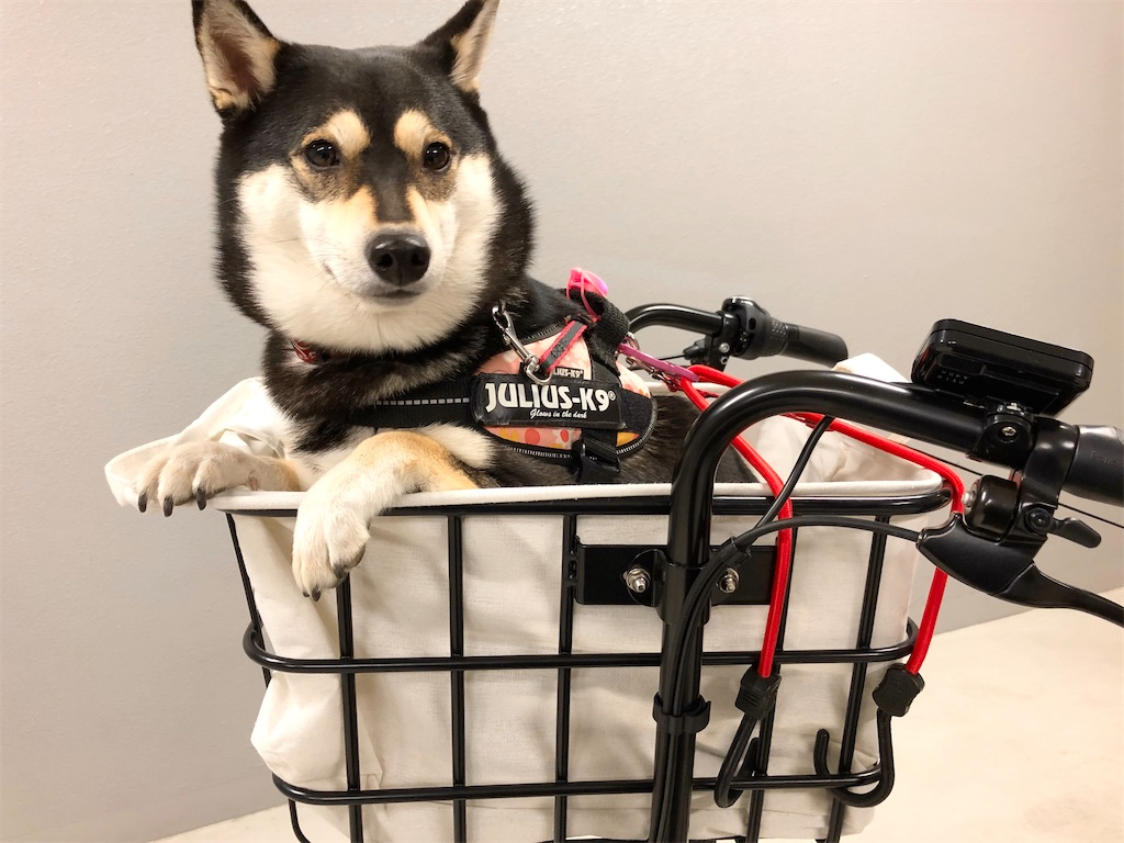 犬 電動自転車 カゴ