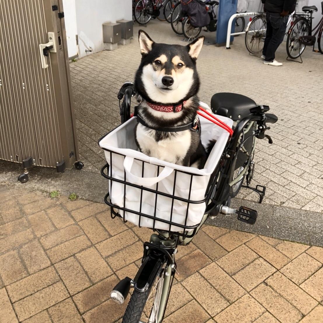 柴犬 電動自転車 カゴ