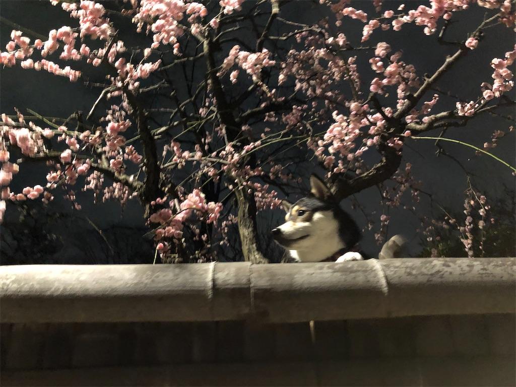 f:id:big-yamatohou:20200213211727j:image