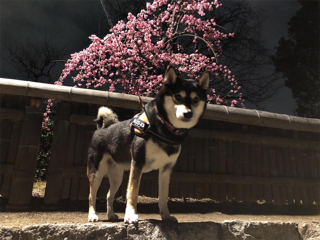犬 大阪城 梅林