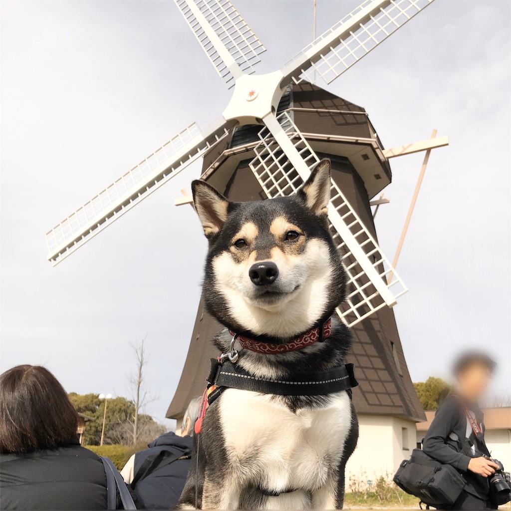 鶴見緑地 犬