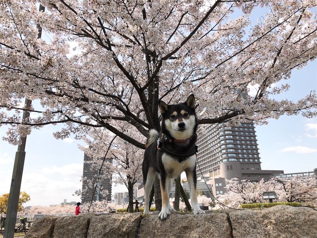 f:id:big-yamatohou:20200412201625j:image
