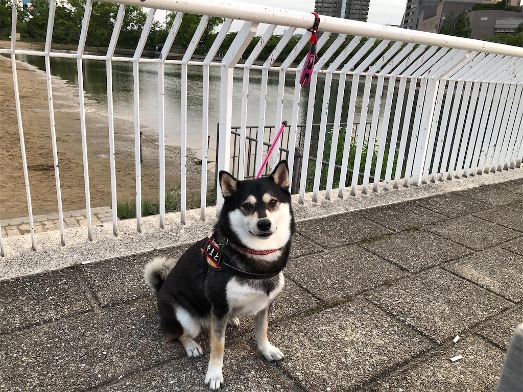 f:id:big-yamatohou:20200706010809j:image