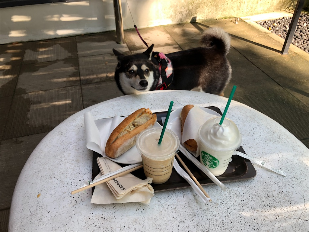 スタバ 犬