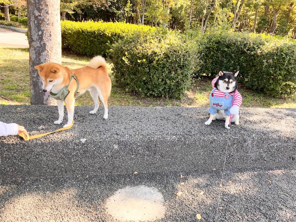 f:id:big-yamatohou:20201101211135j:image
