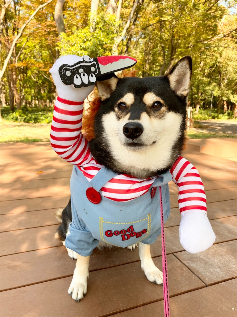 柴犬 ハロウィン 仮装