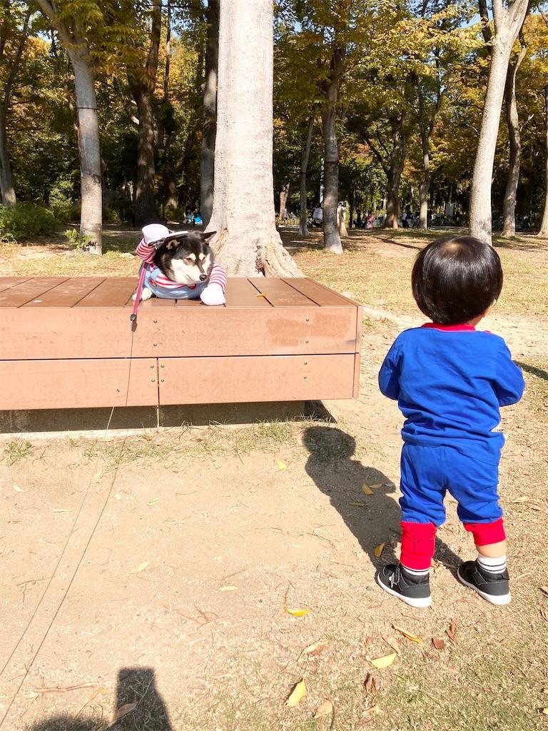 f:id:big-yamatohou:20201101211151j:image