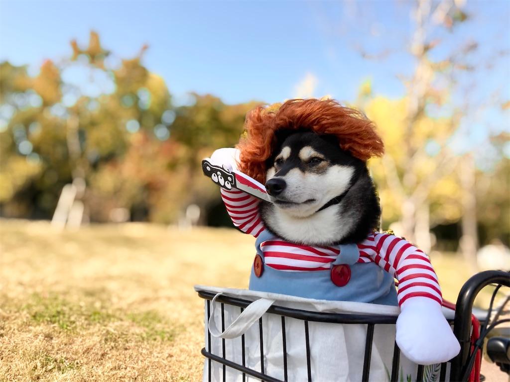 柴犬 仮装 ハロウィン