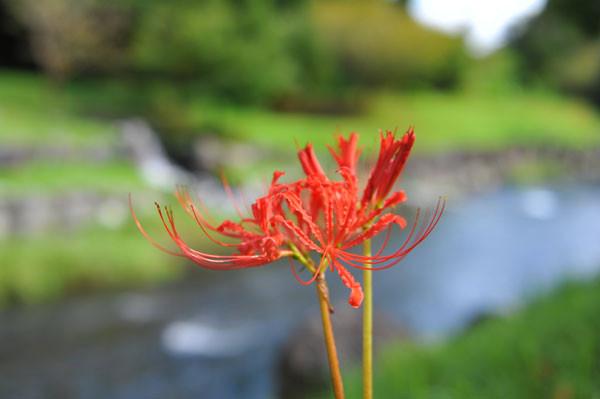 f:id:bilbao-jp:20080905022955j:image:w468