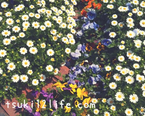 f:id:bipolar-yuri:20200428205620p:plain