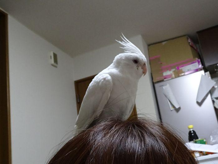 f:id:birdcrown:20180911160316j:plain
