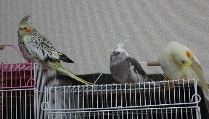 f:id:birdcrown:20180921001954j:plain