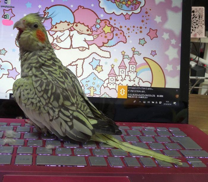 f:id:birdcrown:20180927232110j:plain