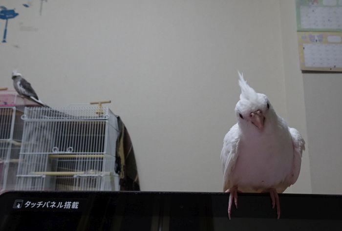 f:id:birdcrown:20180930160232j:plain