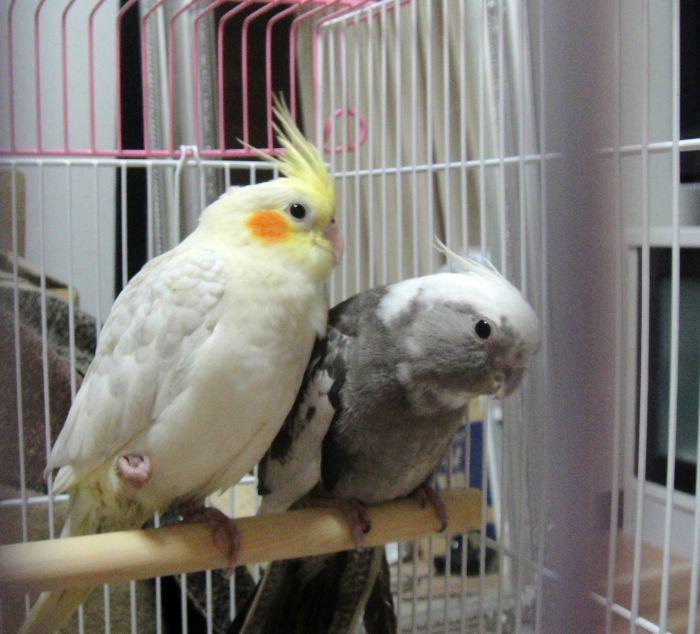 f:id:birdcrown:20180930162005j:plain