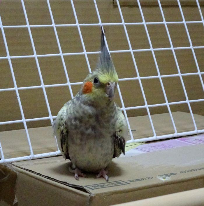 f:id:birdcrown:20181001211921j:plain