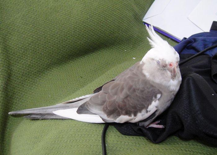 f:id:birdcrown:20181001213819j:plain