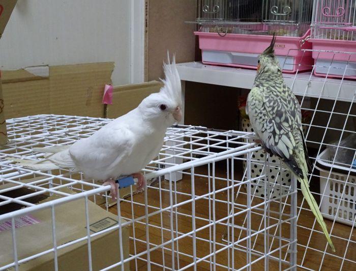 f:id:birdcrown:20181001215145j:plain