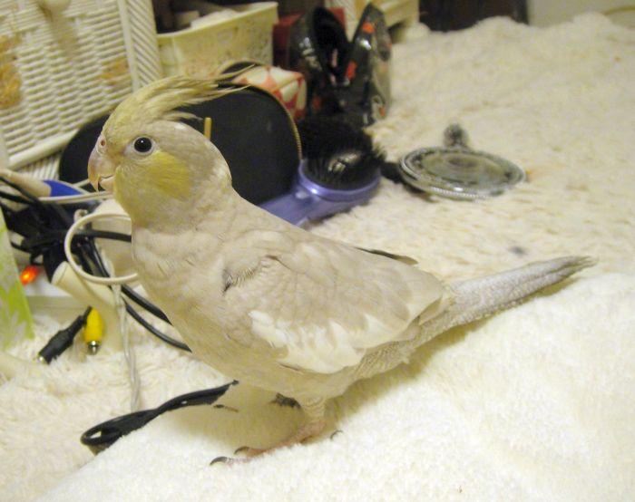 f:id:birdcrown:20181001221059j:plain