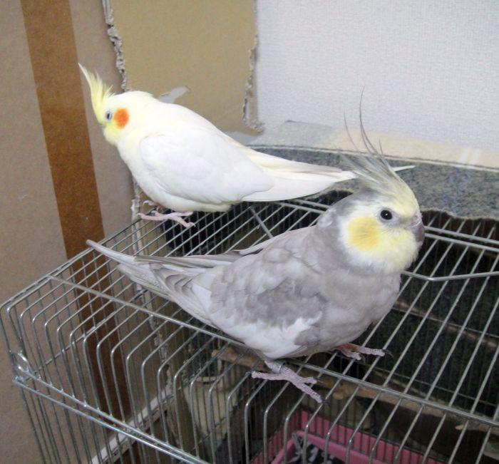 f:id:birdcrown:20181003150907j:plain