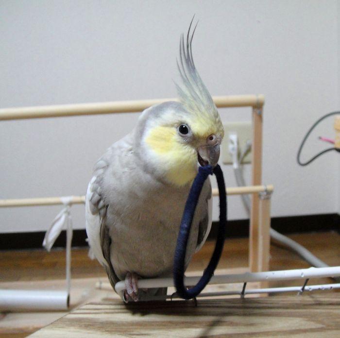 f:id:birdcrown:20181007134137j:plain