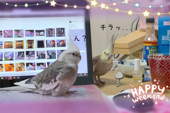 f:id:birdcrown:20181008235055j:plain