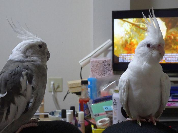 f:id:birdcrown:20181014190121j:plain