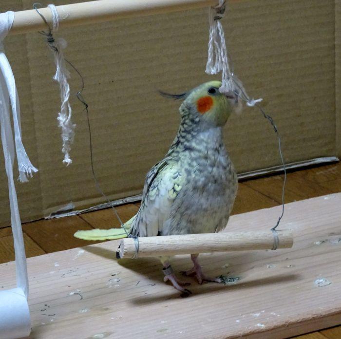 f:id:birdcrown:20181019151823j:plain