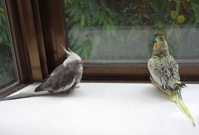 f:id:birdcrown:20181019152946j:plain