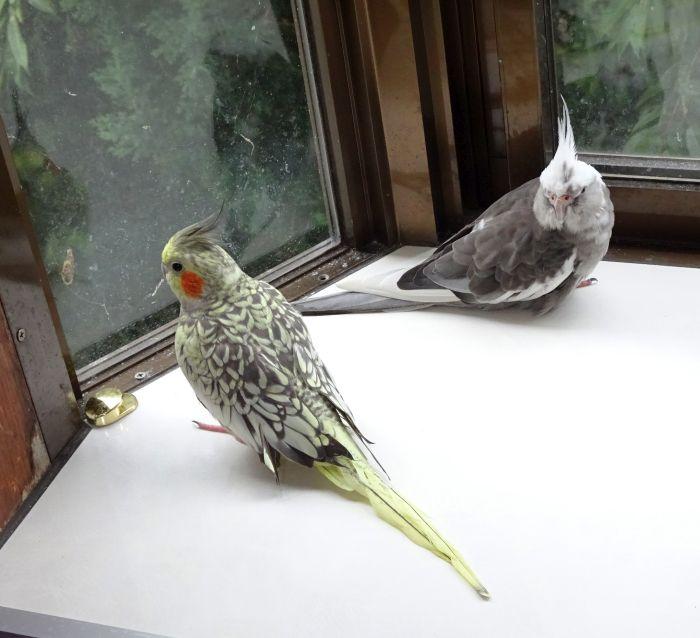 f:id:birdcrown:20181019154044j:plain