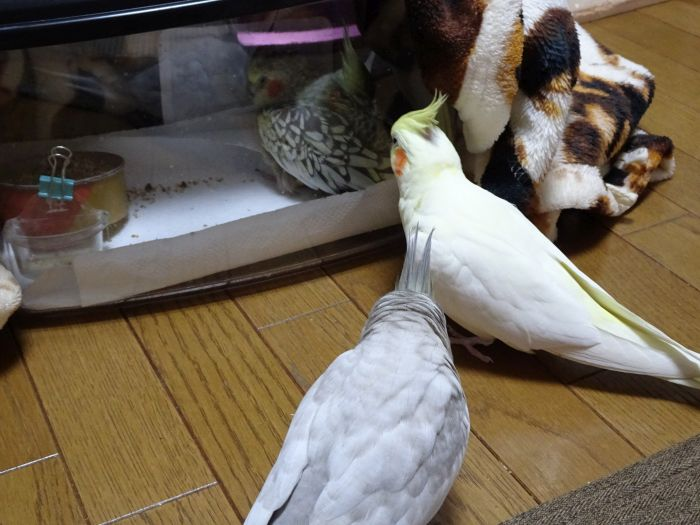 f:id:birdcrown:20181019155048j:plain