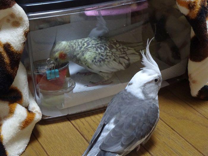 f:id:birdcrown:20181019162139j:plain