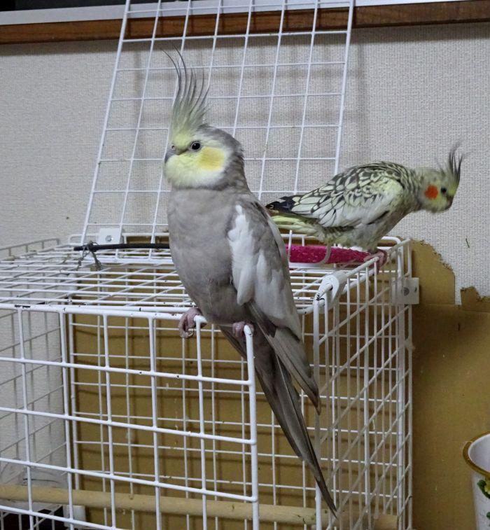 f:id:birdcrown:20181021123002j:plain