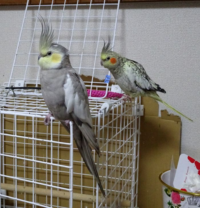 f:id:birdcrown:20181021124520j:plain