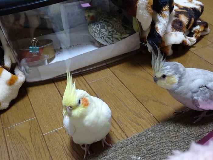f:id:birdcrown:20181021132521j:plain