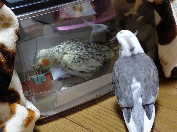 f:id:birdcrown:20181021134128j:plain
