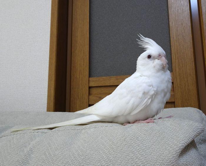 f:id:birdcrown:20181021135424j:plain