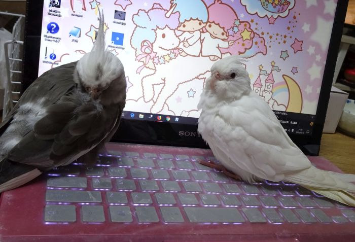 f:id:birdcrown:20181024152146j:plain
