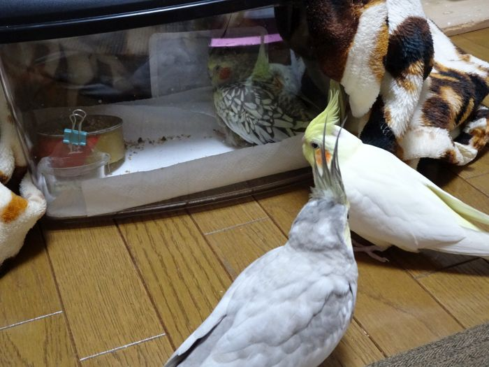 f:id:birdcrown:20181024152558j:plain