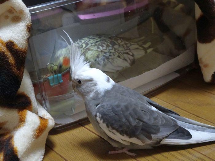 f:id:birdcrown:20181024155038j:plain