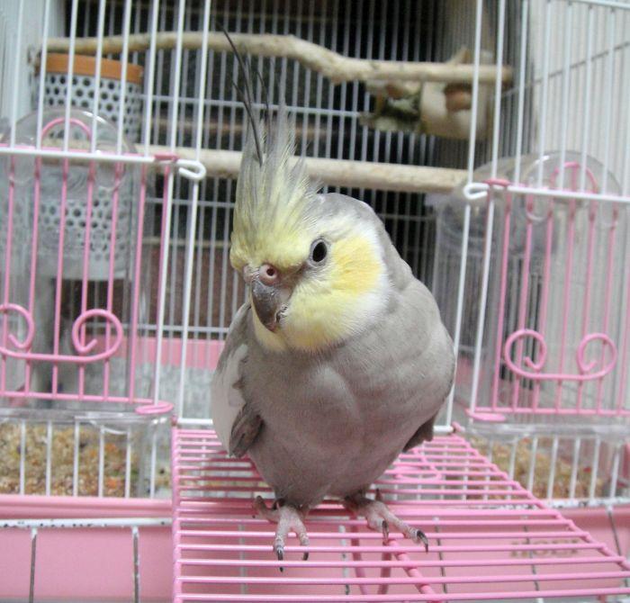 f:id:birdcrown:20181024155629j:plain